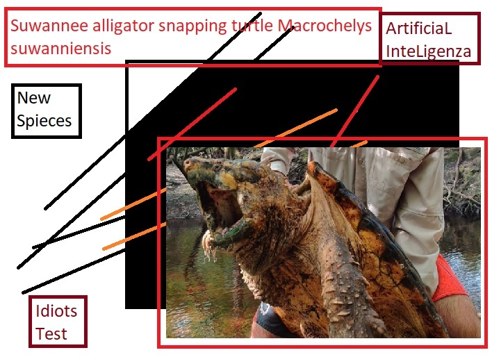 Suwannee alligator snapping turtle Macrochelys suwanniensis ArtificiaL InteLigenza Idiots Test