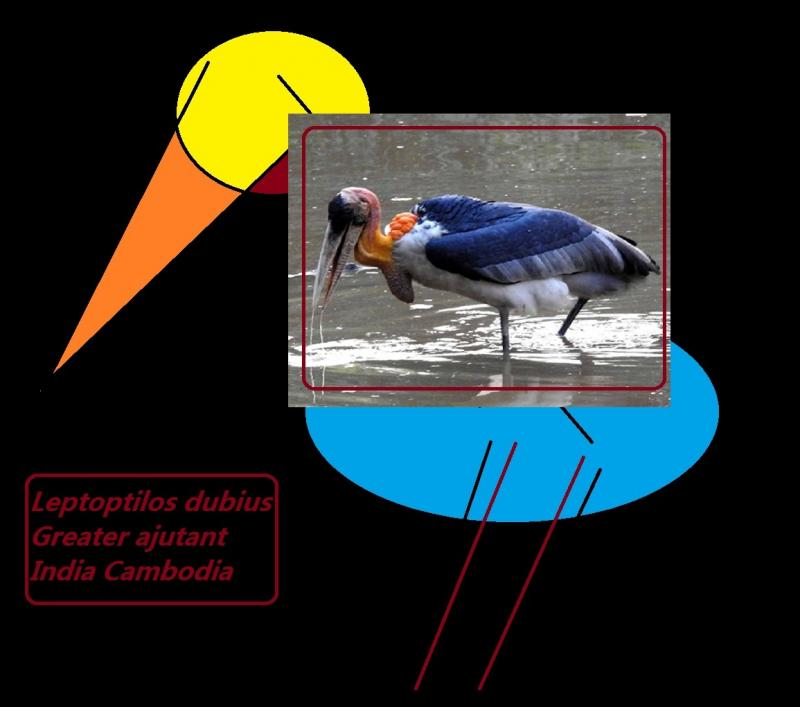 The Greater Adjutant stork india cambodia