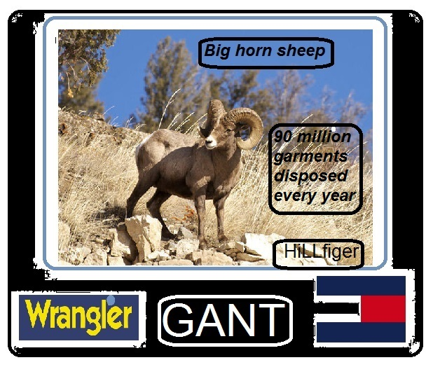 big horn sheep wrangler hillfiger gant 90 million garments disposed every year