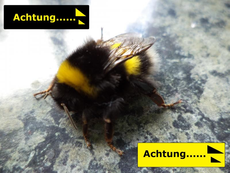 bumble bee achtung