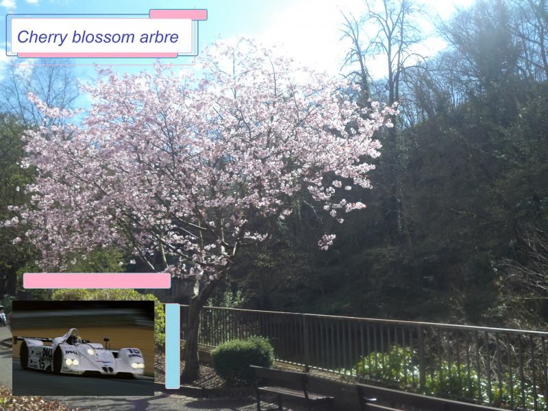 cherry blossom dell