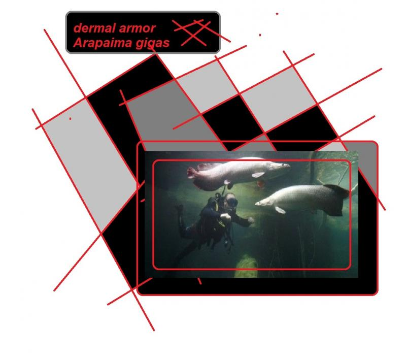dermal armor Arapaima gigas amazon 5