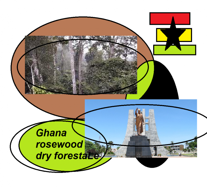 ghana rosewood dry forestale