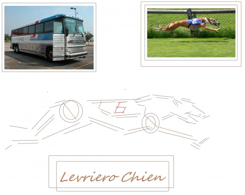 greyhound bus dog diagram chien
