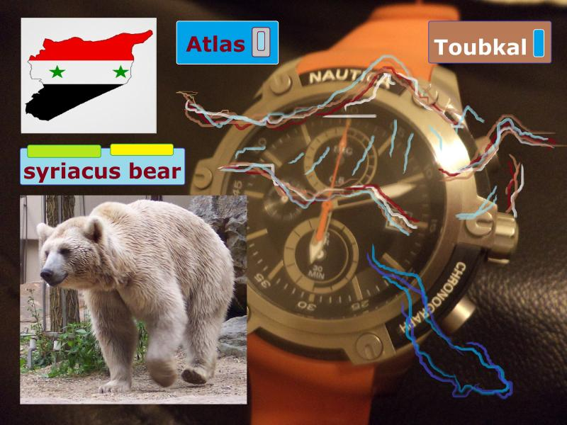 nautica watch syriacus bear
