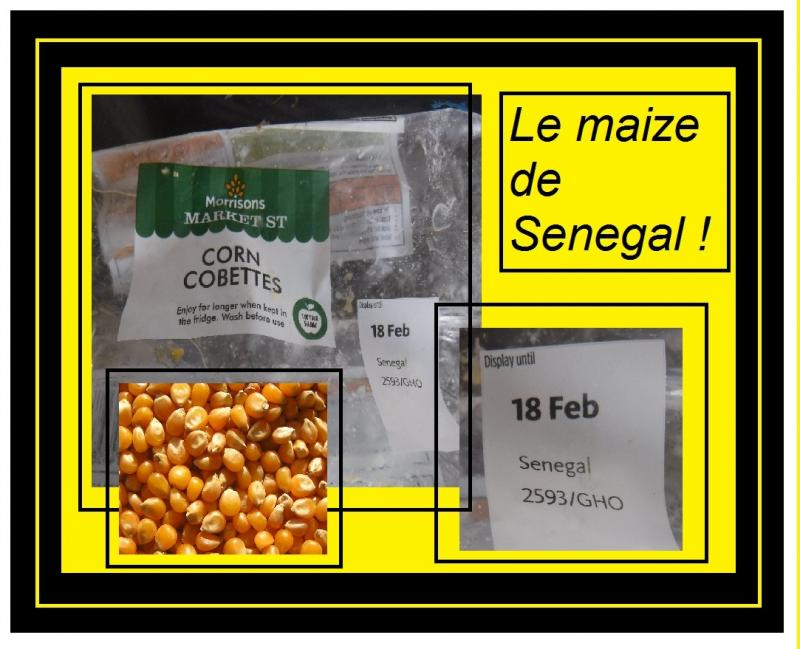 senegal maize