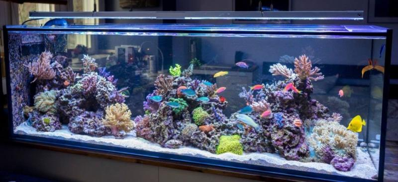 tanked saltwater aquarium